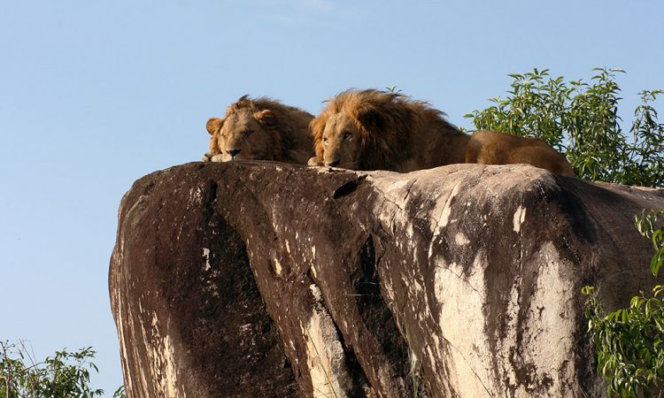 7 Days Murchison Falls and Kidepo safari